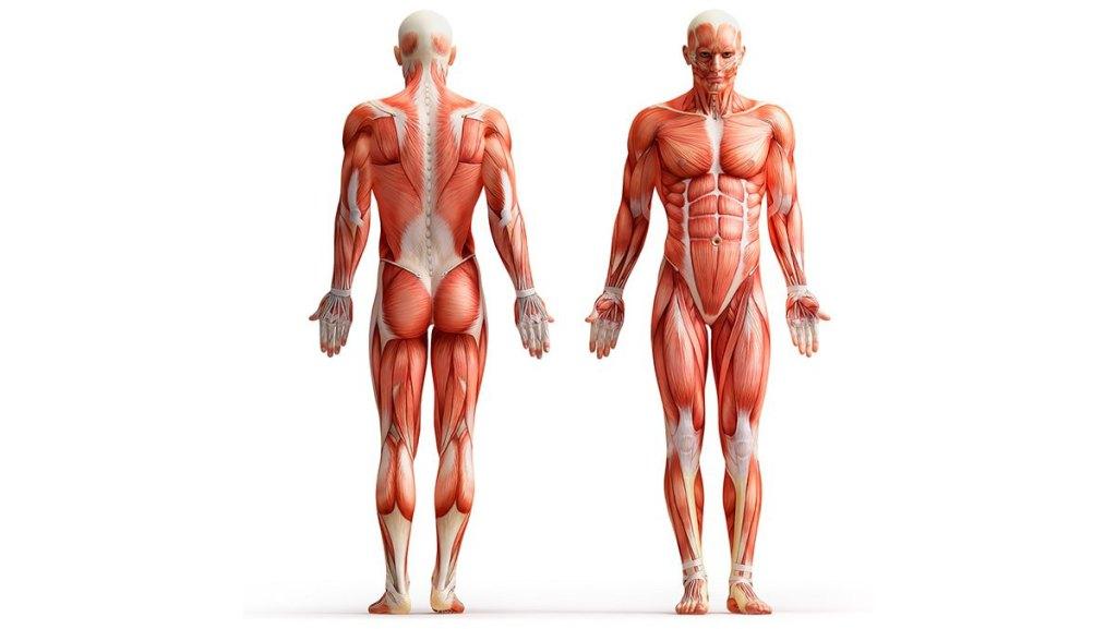 Влияние воды на мышцы и суставы